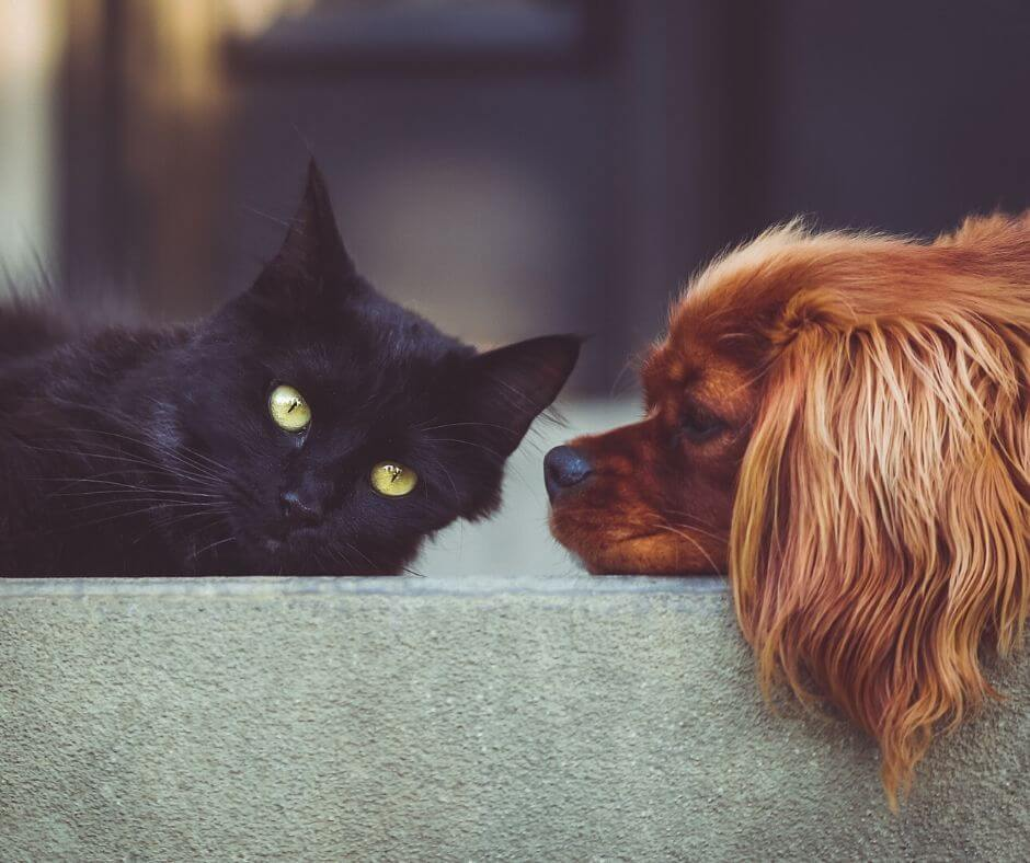CBD Study On Healthy Dogs and Cats